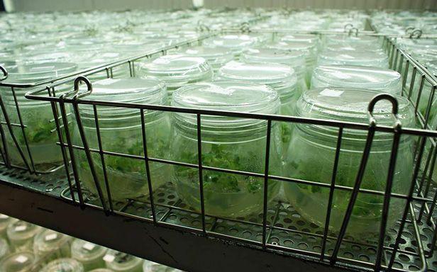 Laboratorio Agrícola Ciudad Real