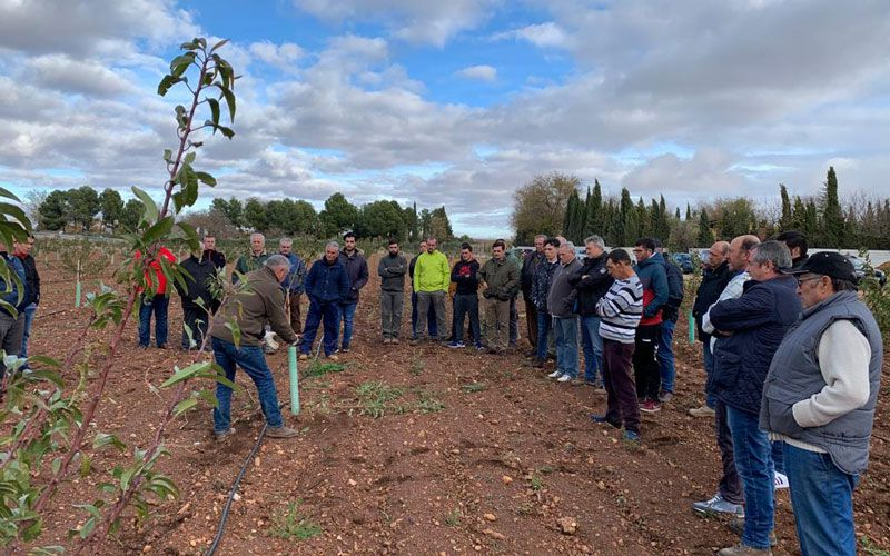 Taller de poda del almendro en Castilla La Mancha